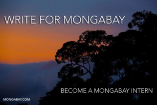 Intern for Mongabay